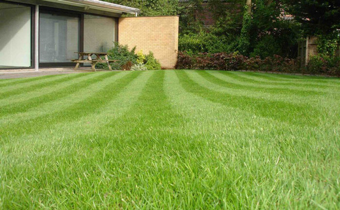 Healthy Lawn Management