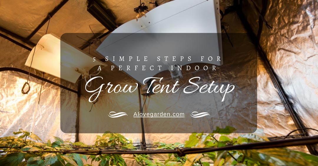 5 Simple Steps For A Perfect Indoor Grow Tent Setup & 5 Simple Steps For A Perfect Indoor Grow Tent Setup - Alovegarden.com