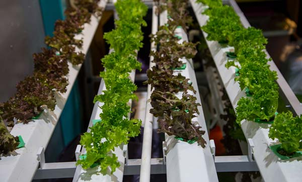 How To Build A Simple DIY Hydroponics System - 23 Easy DIY ...