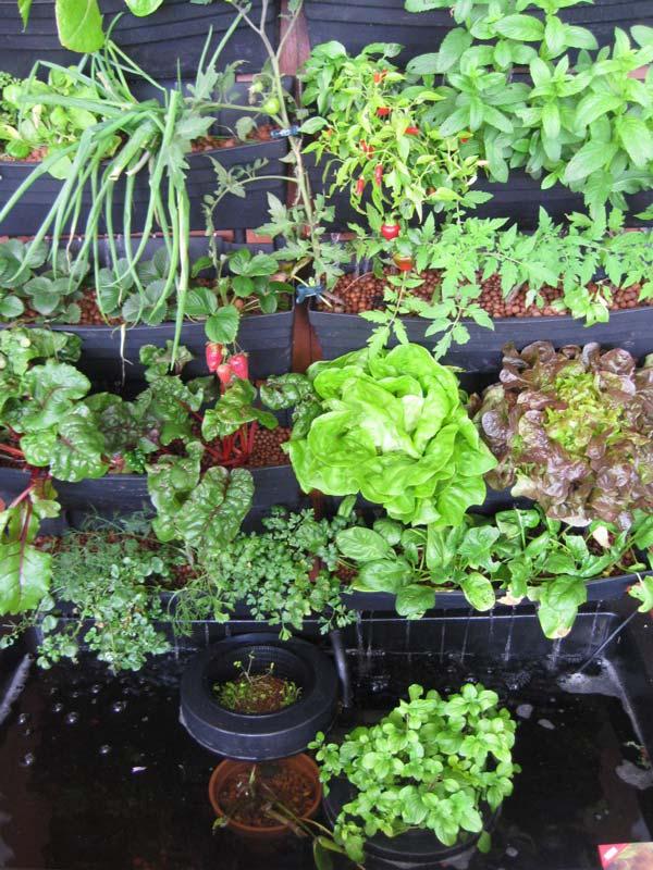Wall Garden Aquaponics