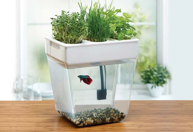 what is aquaponics