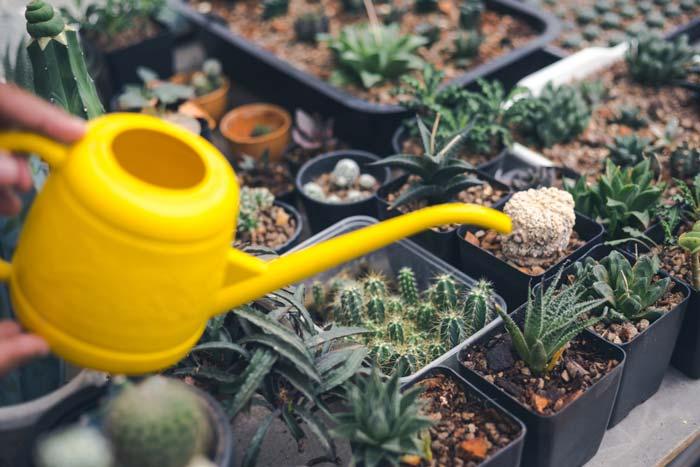 How To Take Care of Aloe Vera