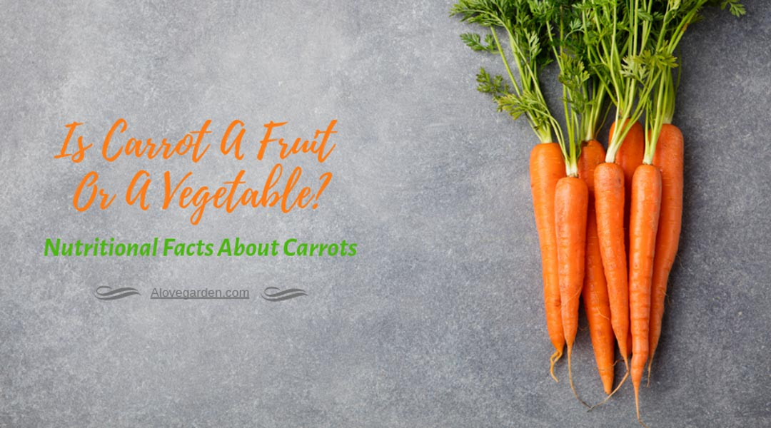 Is Carrot A Fruit