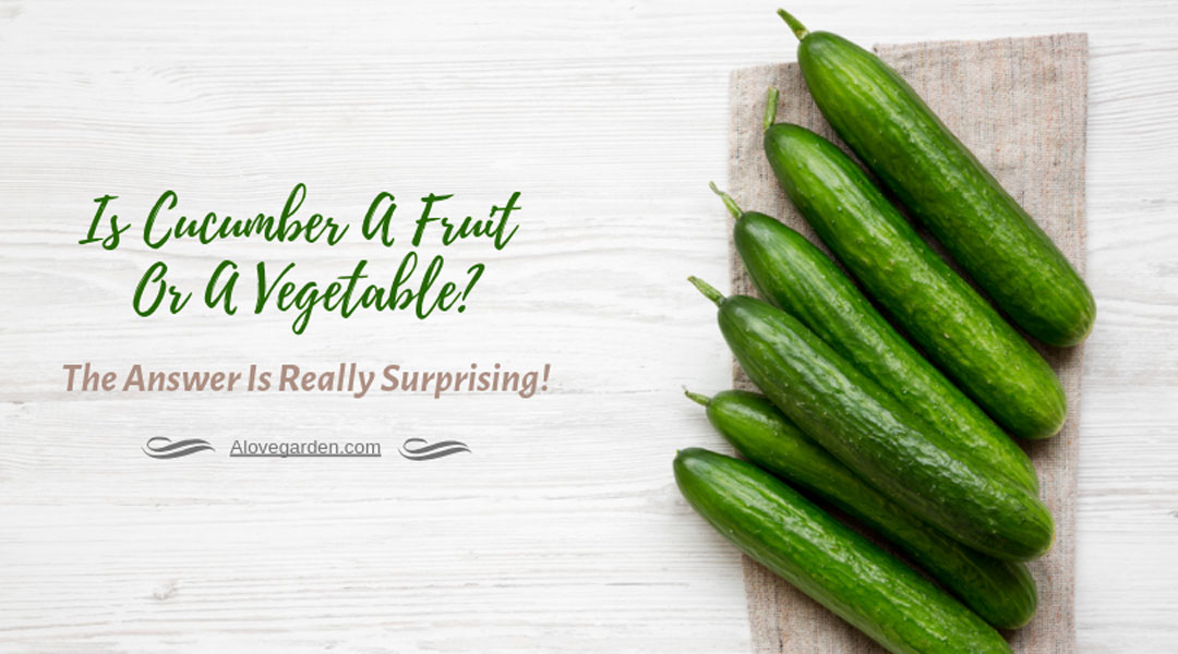 Is Cucumber A Fruit Or A Vegetable? The Answer Is Really Surprising
