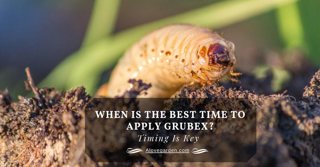 when to apply grubex