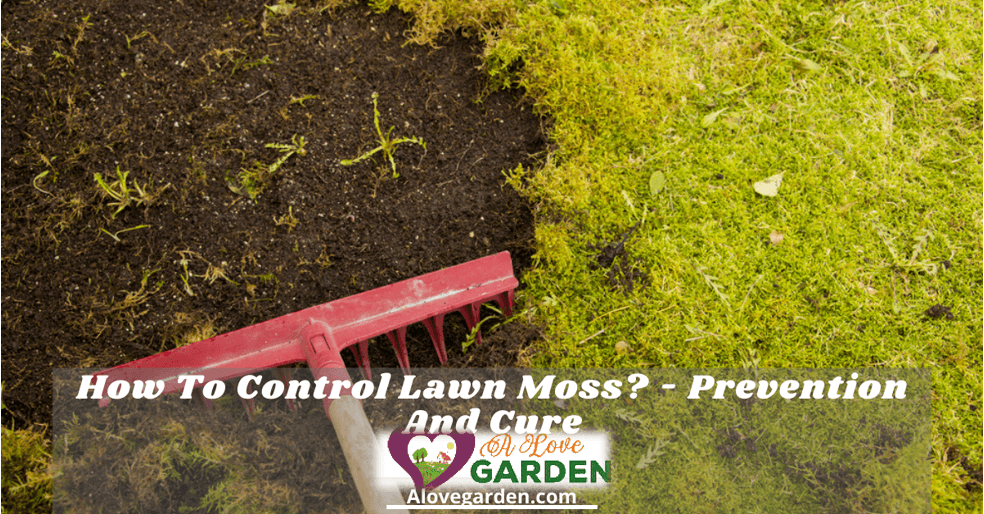 control lawn moss